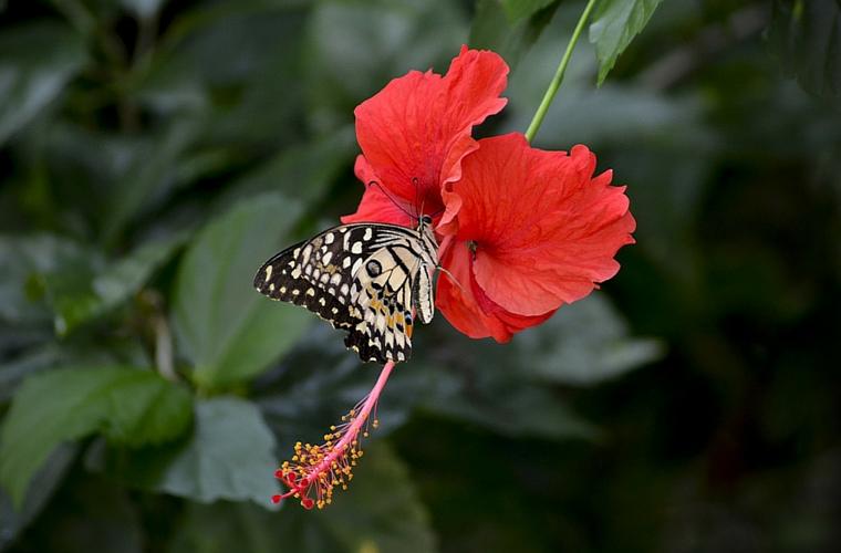 Image courtesy of Pixabay/Truongmad